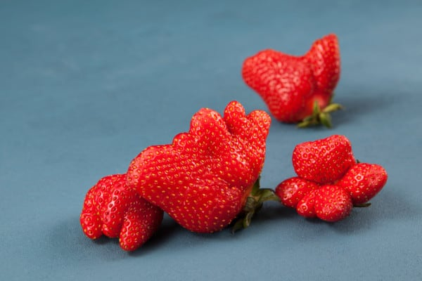 Poorly Pollinated Strawberries