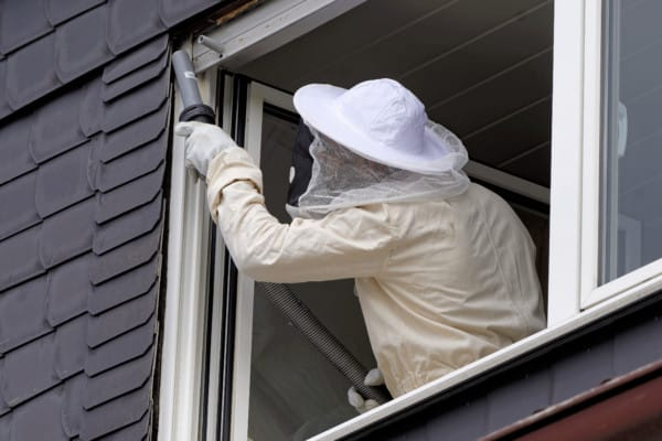 Protective gear for working with wasps