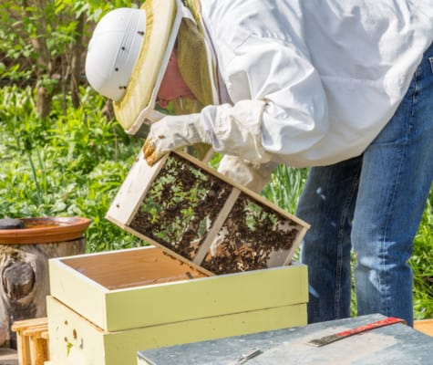 Installing a bee package to make a new beehive