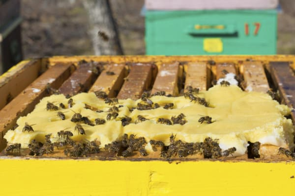 Pollen patty food supplement for honey bees