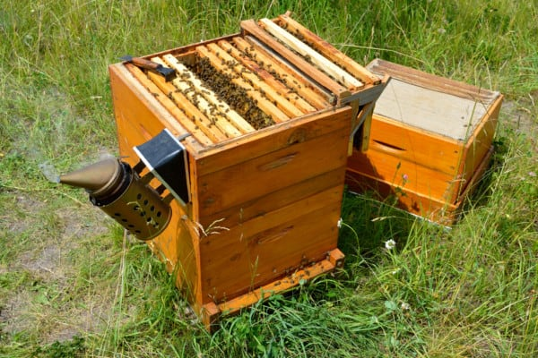 Example of a Langstroth beehive