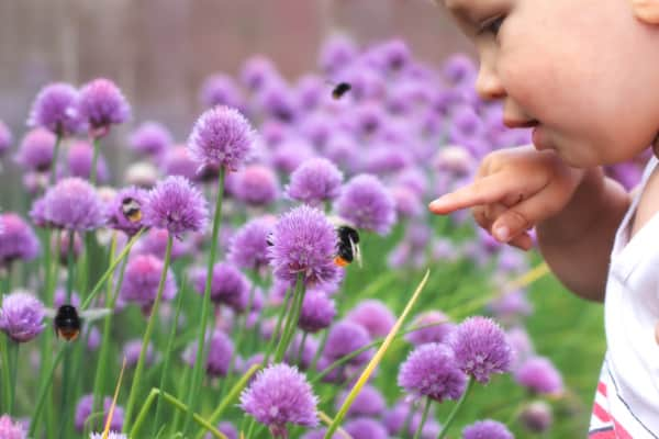 Child Pointing at Bumblebee