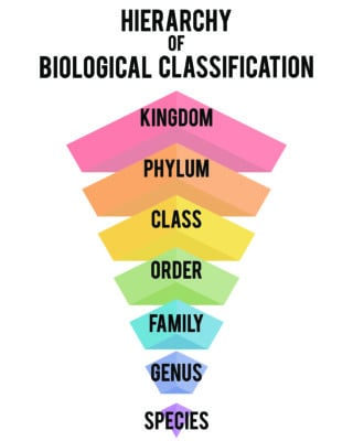 Biological Taxonomy Hierarchy