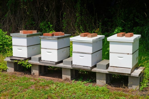 White beehives
