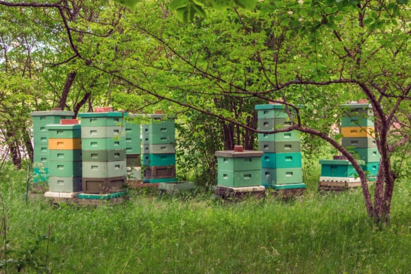 Green hives blending in with their surrounds